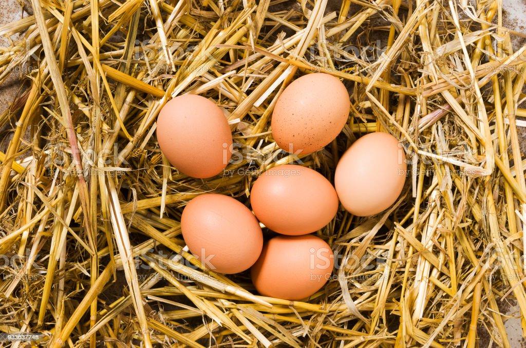 Fresh farm eggs - foto stock