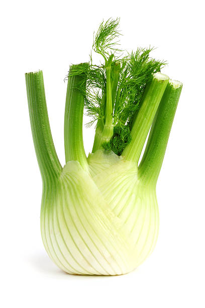Fresh fennel Fresh, organic fennel on a white background fennel stock pictures, royalty-free photos & images