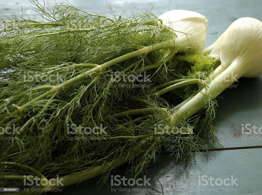 Fresh fennel stock photo