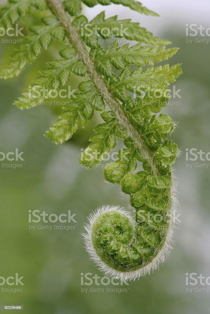 Fresh Fern Frond stock photo