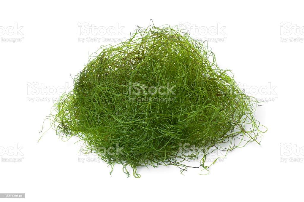 Fresh filamentous green algae stock photo