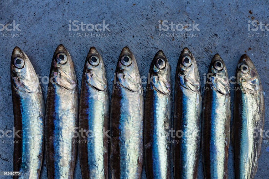 Frischfisch-Sardellen-Hintergrund – Foto