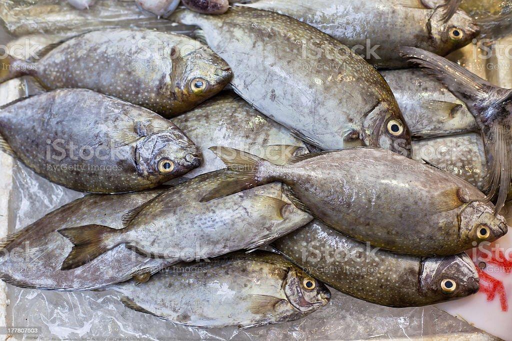 Fresh Fish at Local Asian Market royalty-free stock photo
