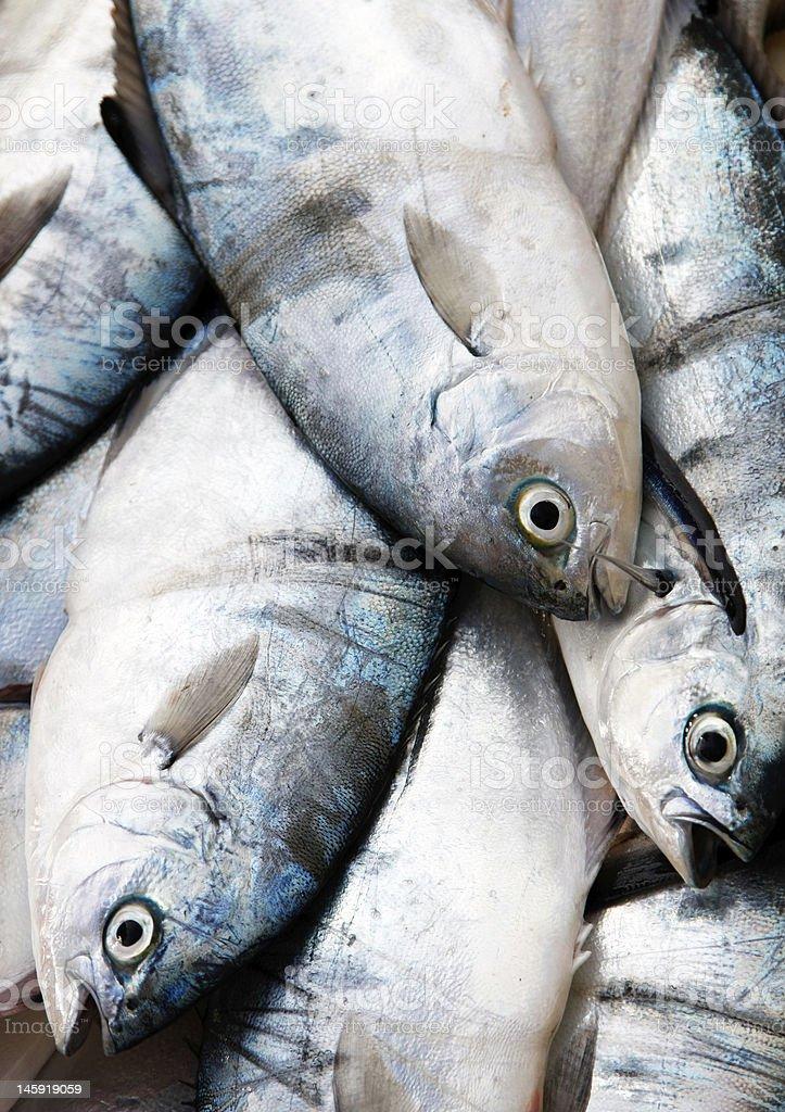 Fresh fish at market royalty-free stock photo