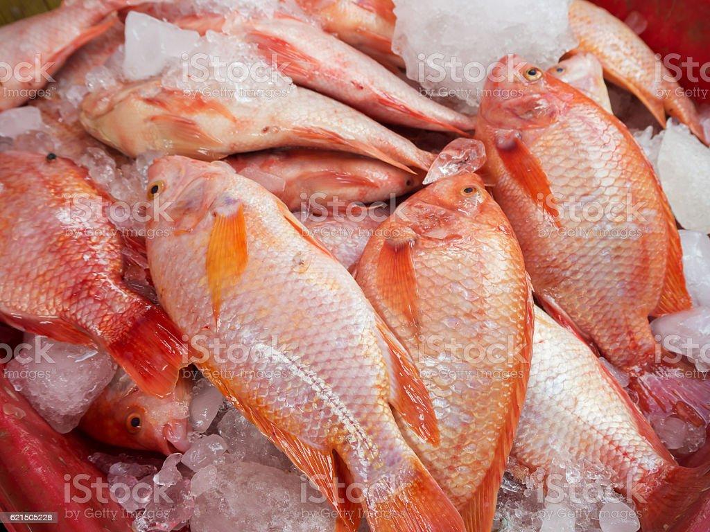 Pesce fresco al mercato, Thailandia  foto stock royalty-free