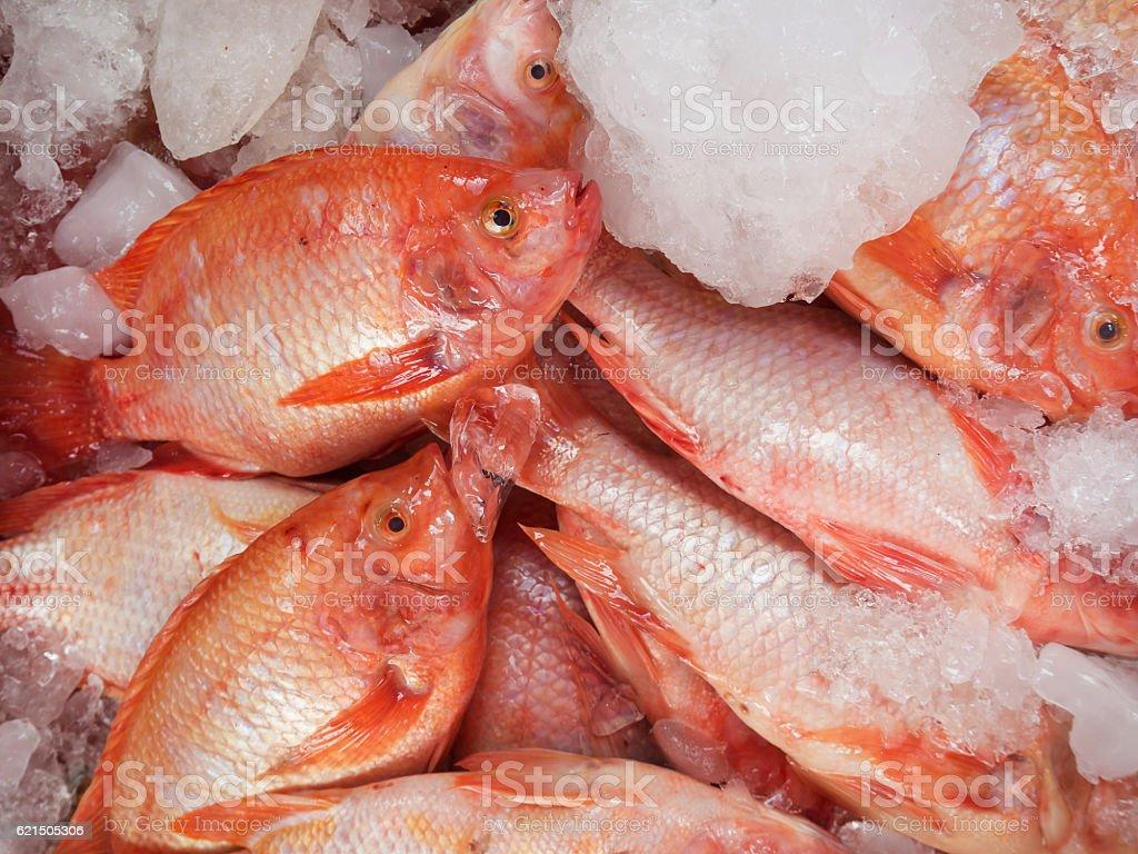 Poisson frais du marché, Thaïlande  photo libre de droits