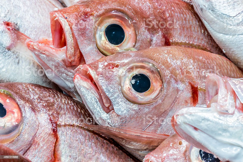 fresh fish displayed at a fish market stock photo