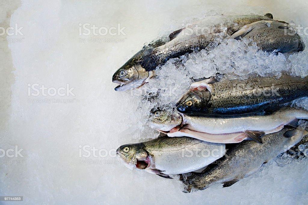 Fresh Fish displayed on Ice Seafood Market stock photo