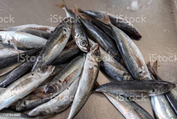Fresh fish for sale at a fish market picture id1157944660?b=1&k=6&m=1157944660&s=612x612&h=xv53qpwu3dgygjxd xvgzx1ian8qhdvzmgdozcn3yrg=
