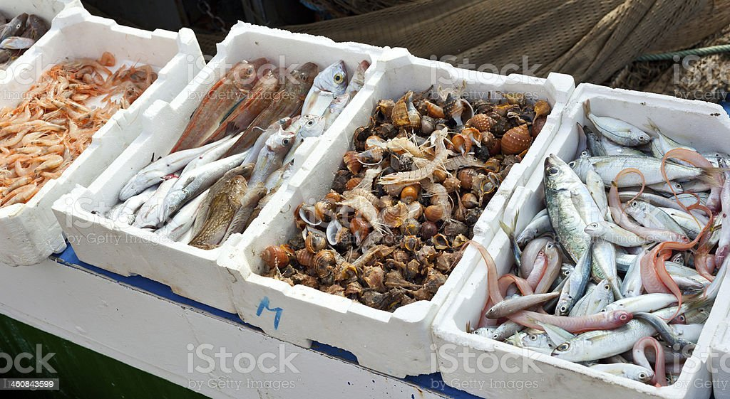 Fresh fish for sale at the harbor stock photo