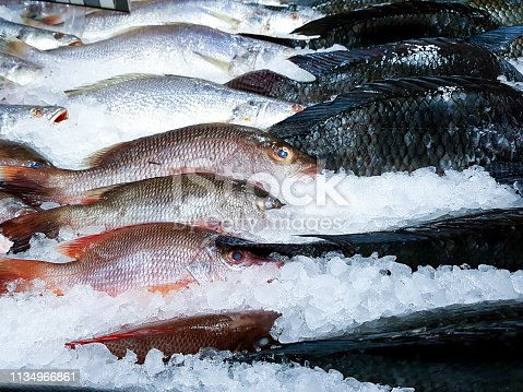 Different species of fresh fish stored in ice in a fish shop. Fishing industry.