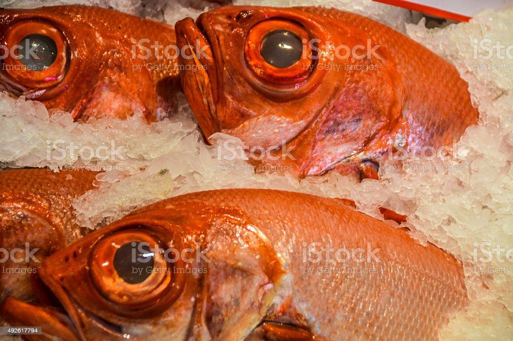 Fresh fish in market stock photo