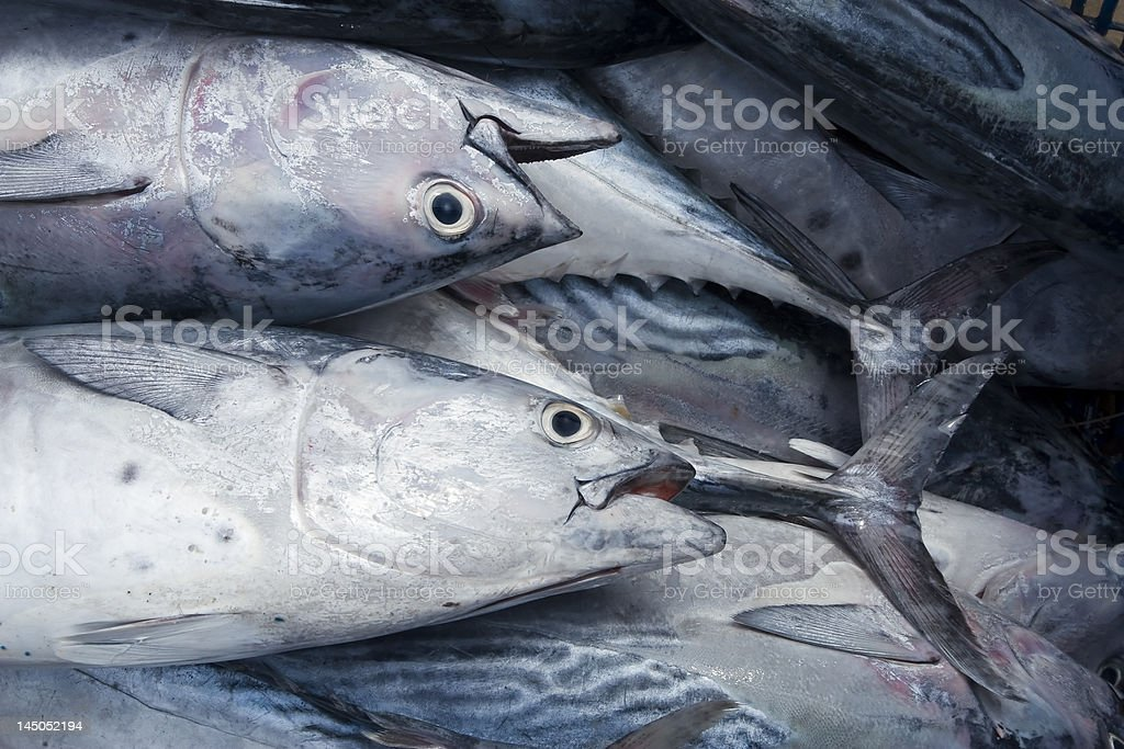 fresh fish in the marketplace stock photo