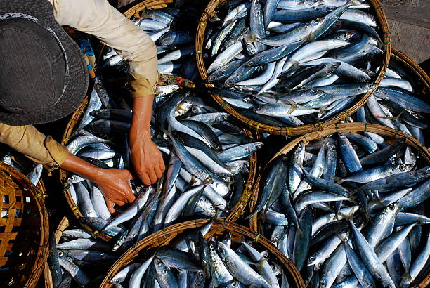 Fresh fish is sorted at market in Hoi An, Vietnam Fresh fish is sorted at a market in Vietnam asian market stock pictures, royalty-free photos & images