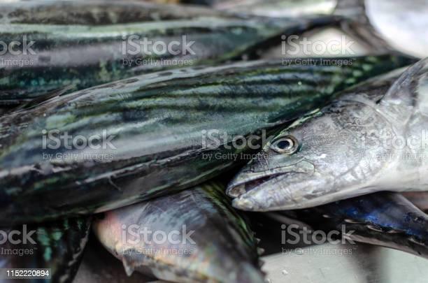 Fresh fish lying in a tray on the market for sale picture id1152220894?b=1&k=6&m=1152220894&s=612x612&h=uy c3nhwti47zmrpktkir5dqj8mrrcdrzz mc7w lge=