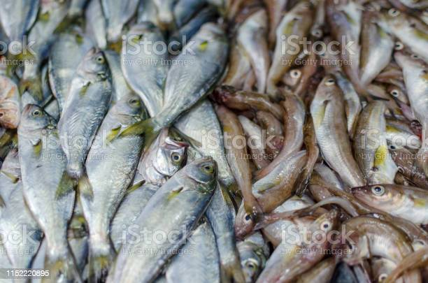 Fresh fish lying in a tray on the market for sale picture id1152220895?b=1&k=6&m=1152220895&s=612x612&h=8x413dujf2iqdfn7soqqd2hik8tchci4jpvkyeiznmc=