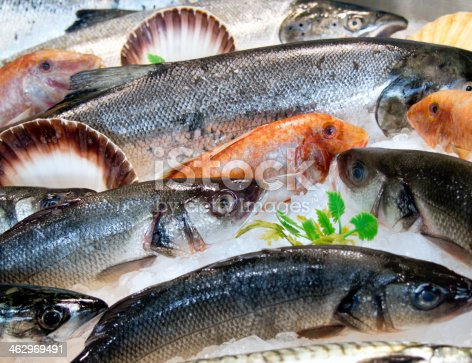 red mullet, sea bass, salmon and scallops