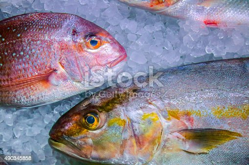 Fresh fish on ice,