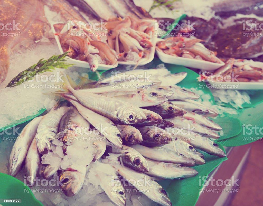 Peixe fresco do mercado - foto de acervo
