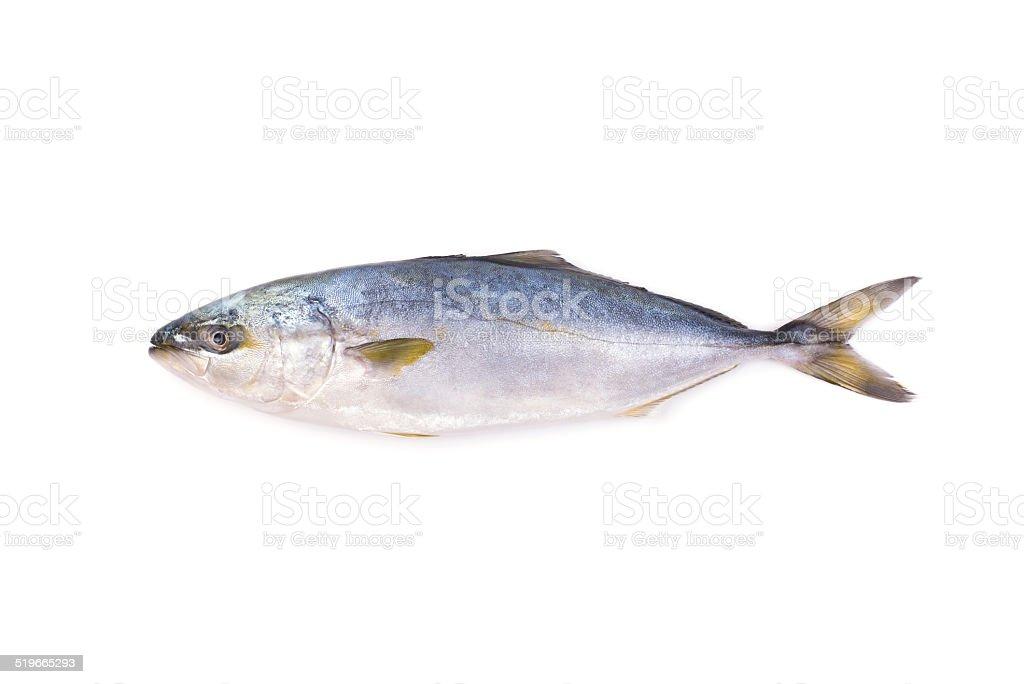 Fresh fish (hamachi fish) on white background. stock photo