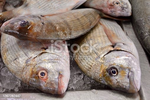 Close up of fresh fish . Algarve, Portugal.