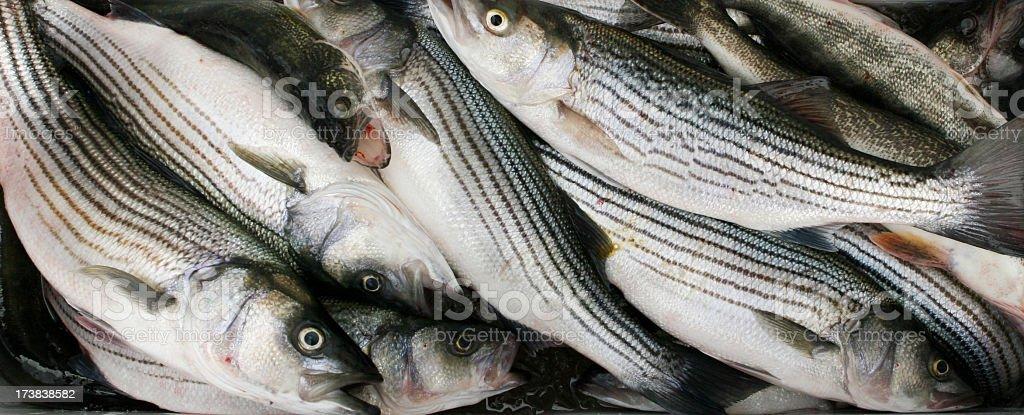 Fresh Fish royalty-free stock photo