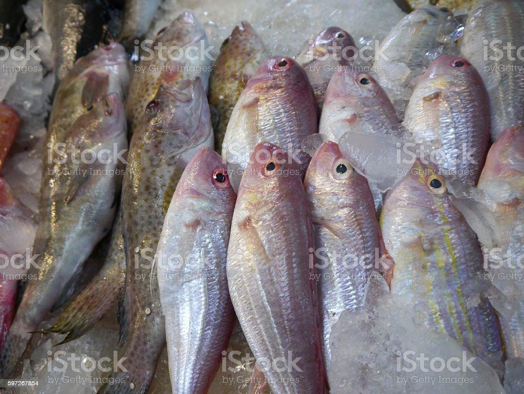 Frischer Fisch  Lizenzfreies stock-foto