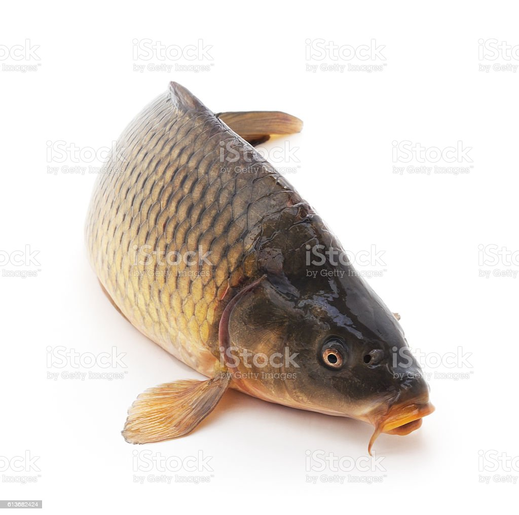 Fresh fish. stock photo