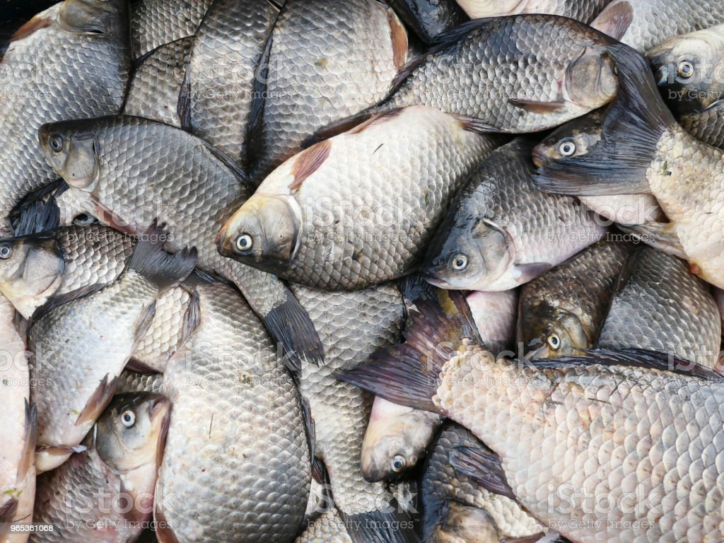 Fresh fish zbiór zdjęć royalty-free
