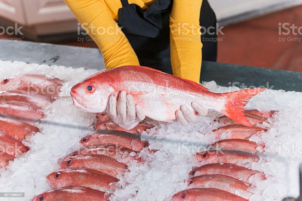 Fresh fish, red snapper, for sale in seafood store stock photo