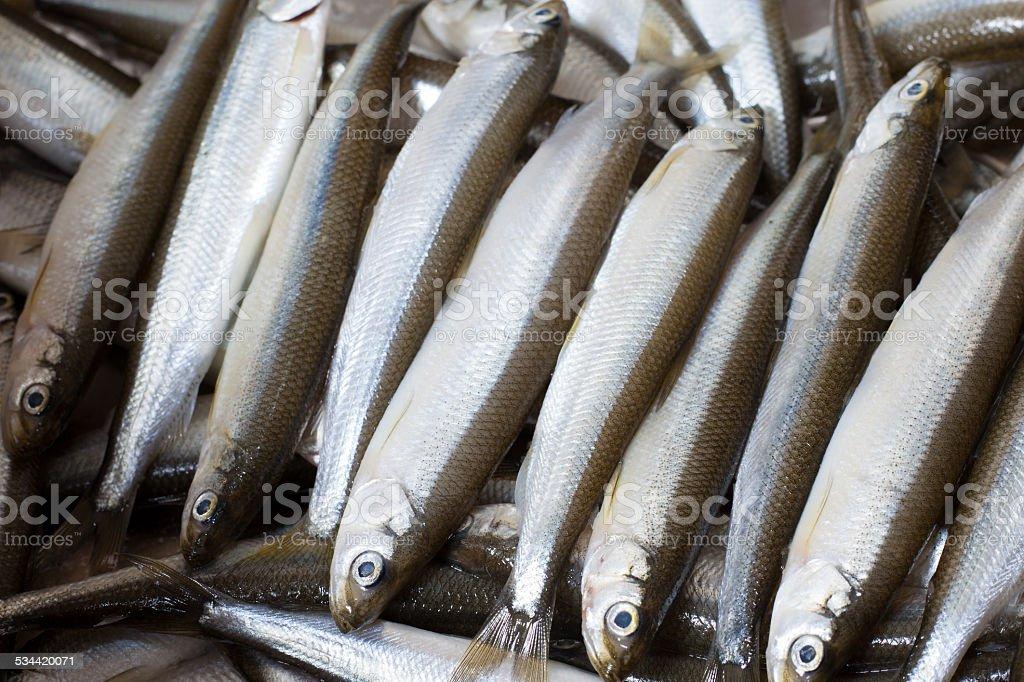 Fresh fish smelt stock photo
