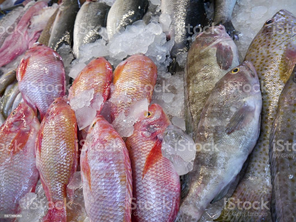 Fresh fish sold royalty-free stock photo