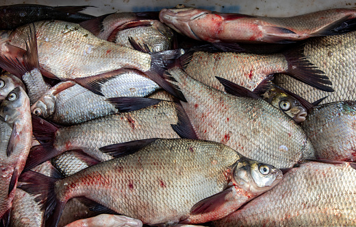 fresh fish sold straight from the fishing boat in the port