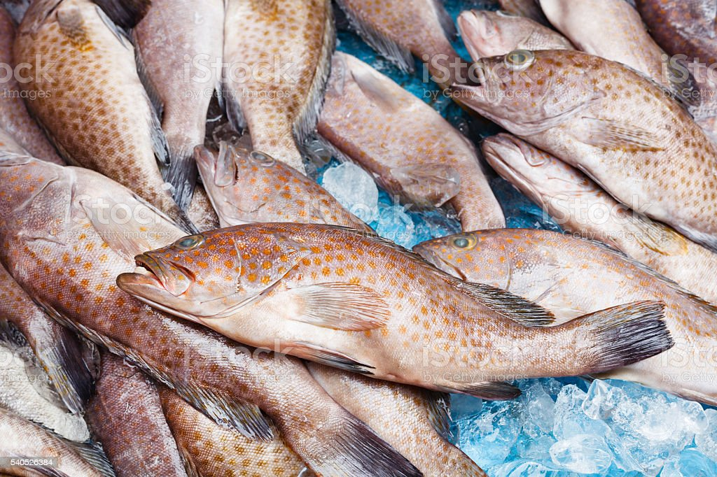 Fresh fish. Trout in market. Background. stock photo