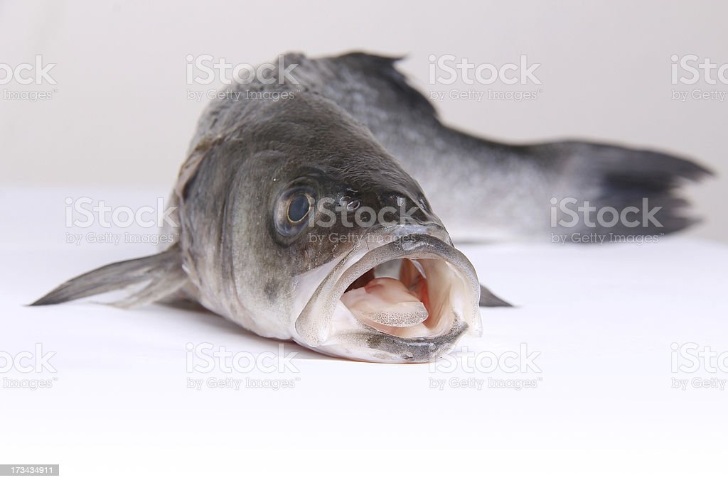 Fresh fish with open mouth royalty-free stock photo