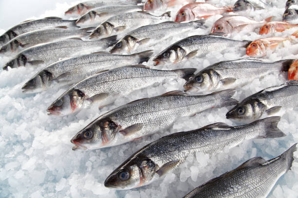 Fresh fishes on ice stock photo