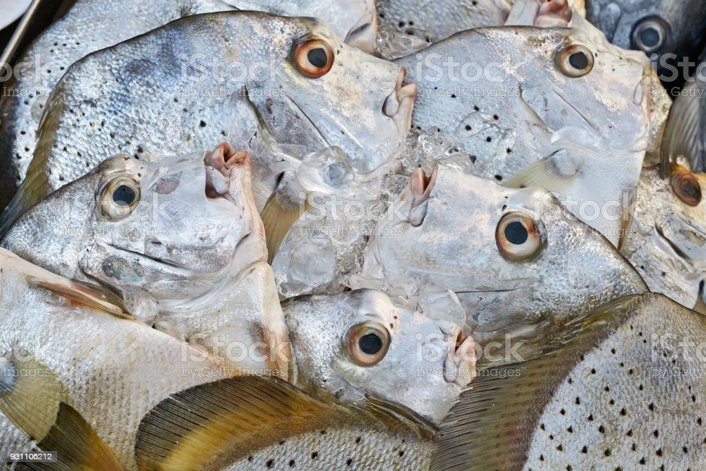 Piyasa üzerinde taze balıklar - Royalty-free Balık Stok görsel
