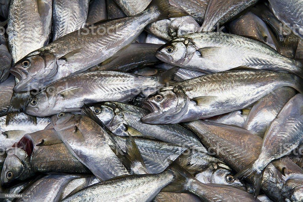 Fresh fishes. royalty-free stock photo