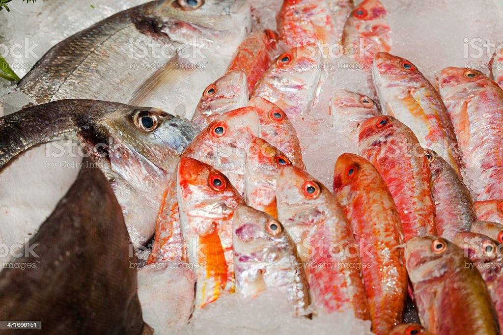 Fresh Fishes royalty-free stock photo