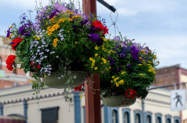 Fresh flower basket hanging on Broad street in Victoria, British Columbia stock photo