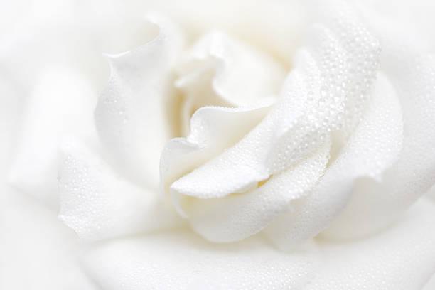 Fresh flower picture id483767029?b=1&k=6&m=483767029&s=612x612&w=0&h=sjy8vdkqrqzhcw zoacgarsusgzuzp7zhflibwcltky=