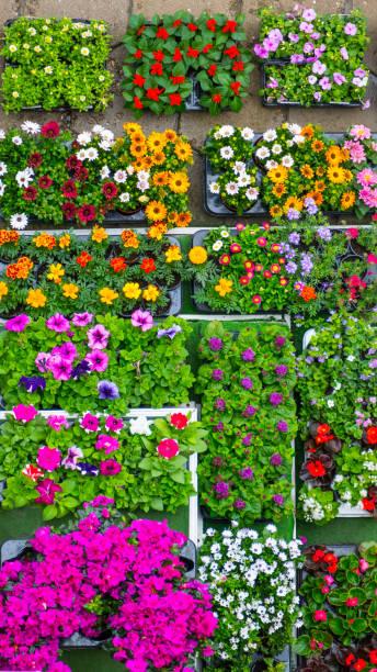 Fresh flowers in crates picture id947756638?b=1&k=6&m=947756638&s=612x612&w=0&h=gykdpbmbgu5utmcivzlee0jf9qfkdgglhrijy35fttk=