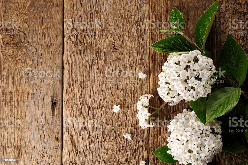 fresh flowers on a wooden table stock photo