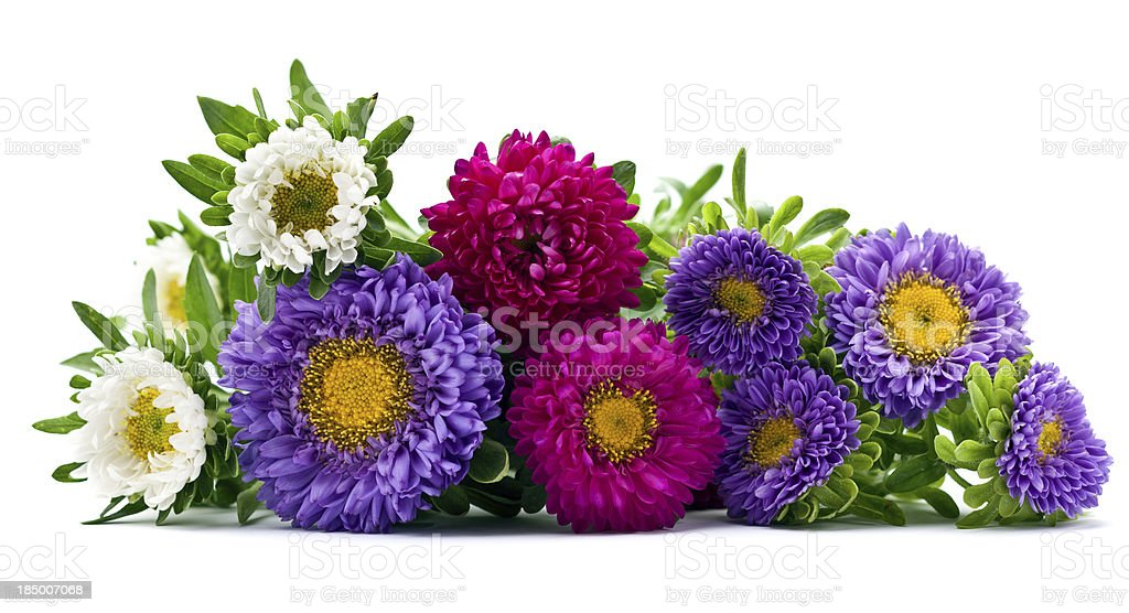 Fresh  flowers stock photo