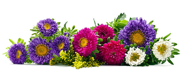 Frische Blumen – Foto