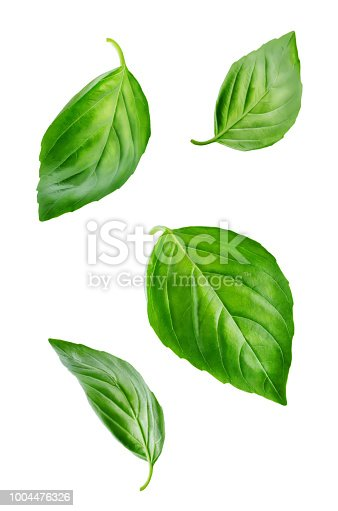 Fresh Flying Basil leaves on a white background. toning. selective focus