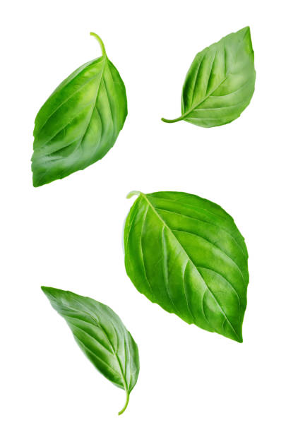 fresh flying basil leaves - leaf imagens e fotografias de stock