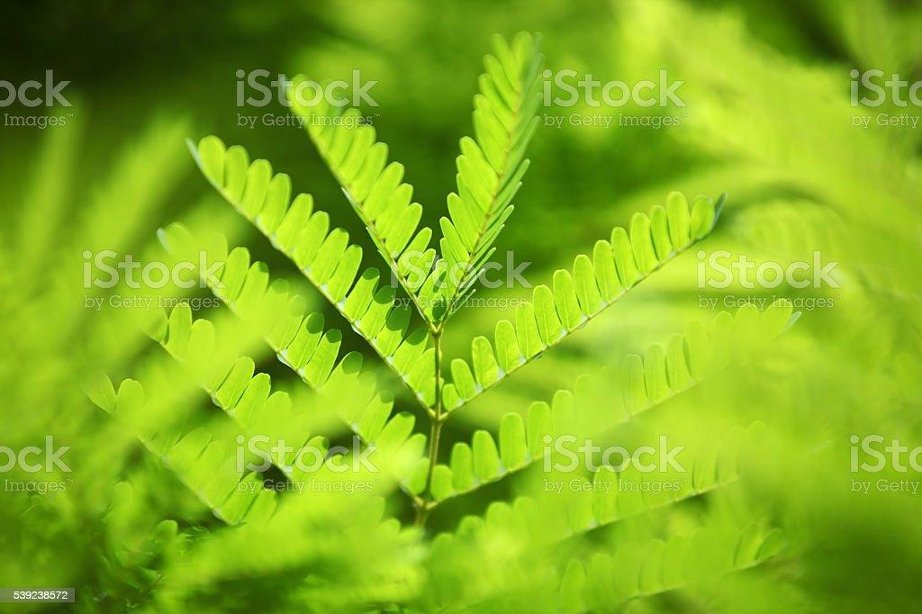 fresh foliage background. royalty-free stock photo
