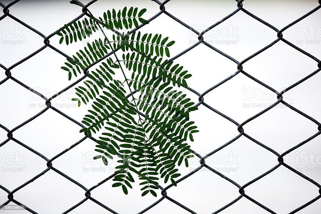 Plantas frescas en la malla valla como fondo. foto de stock libre de derechos