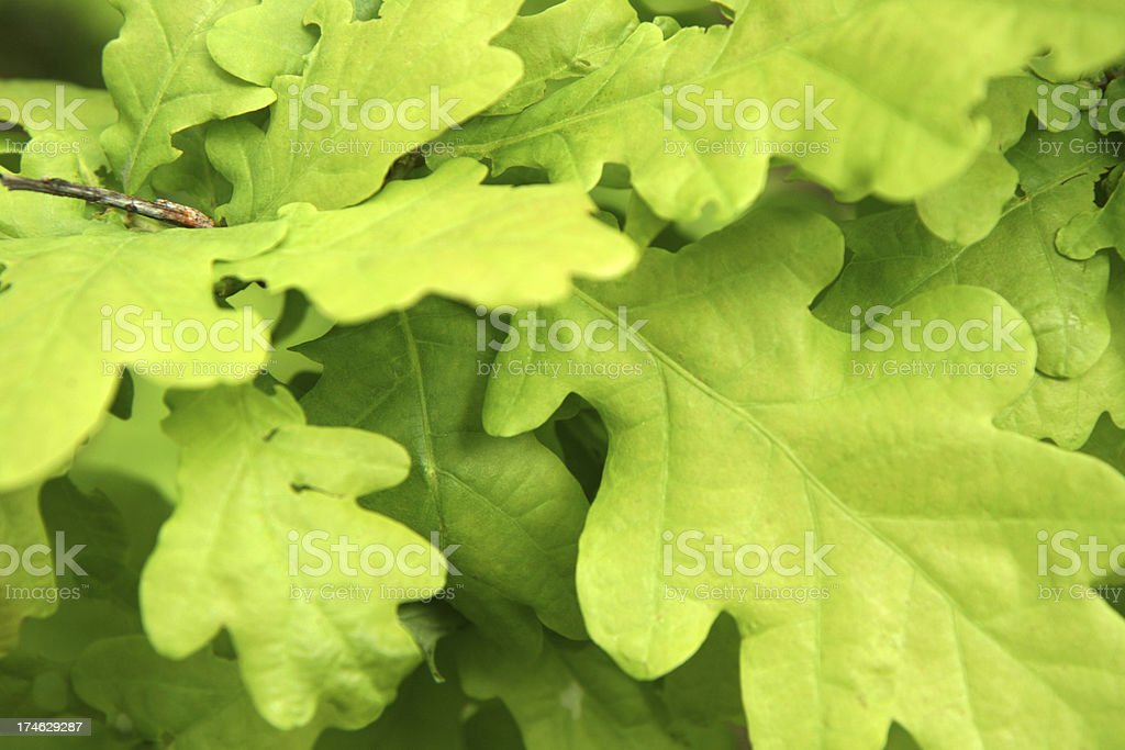 fresh foliage stock photo